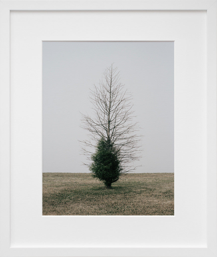 Belmont Harbor Tree II, Chicago