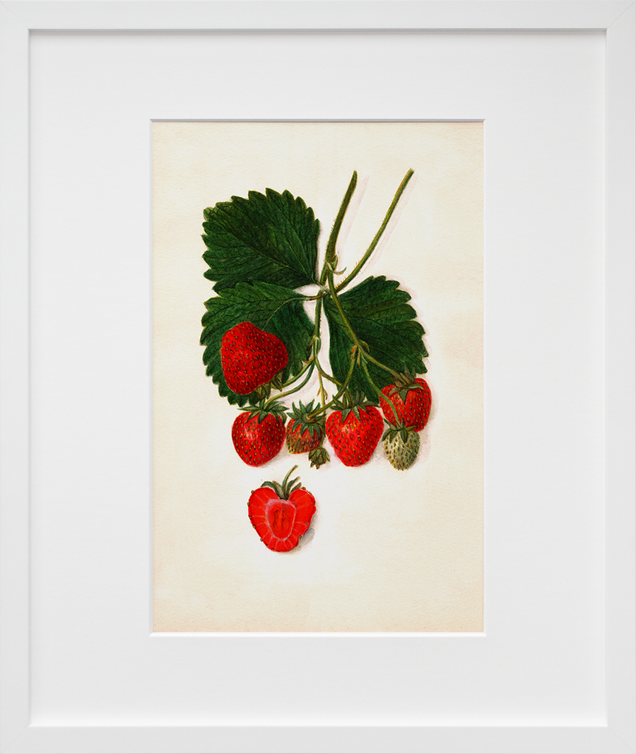 Vintage Watercolor Berry Trio