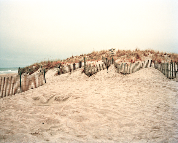 Jones Beach Dream (dunes)