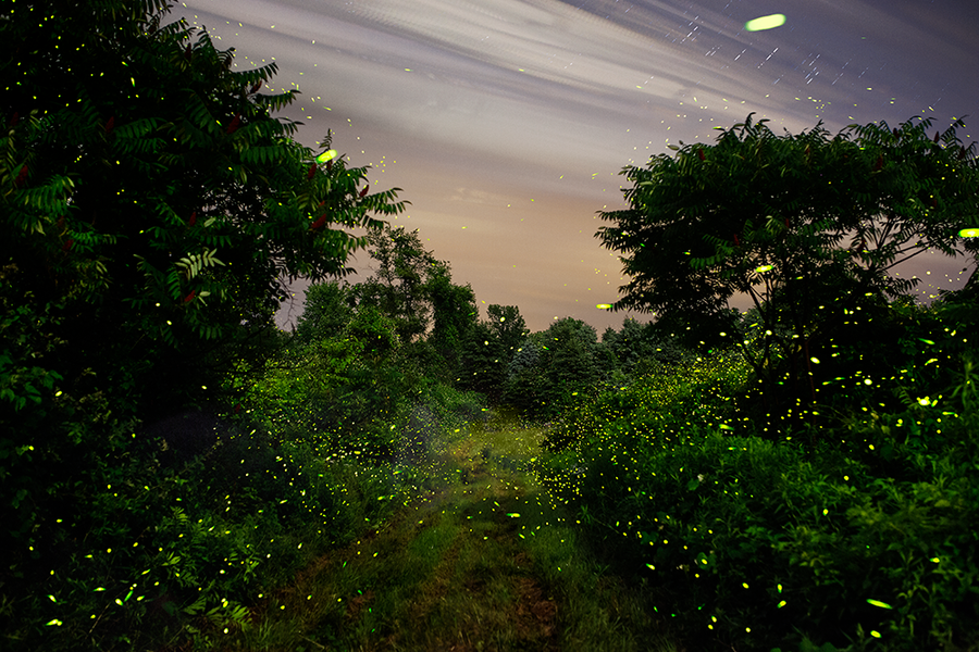 Fireflies under the full moon along the White Clay Kill, Tivoli, NY 7/9/14