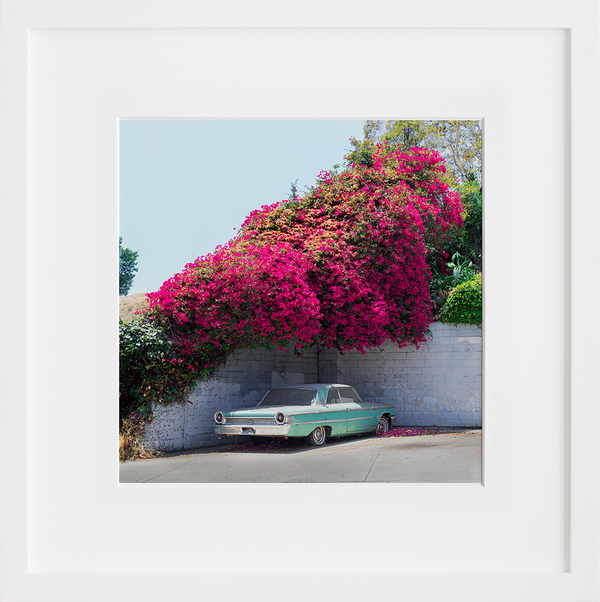 Bougainvillea Galaxie