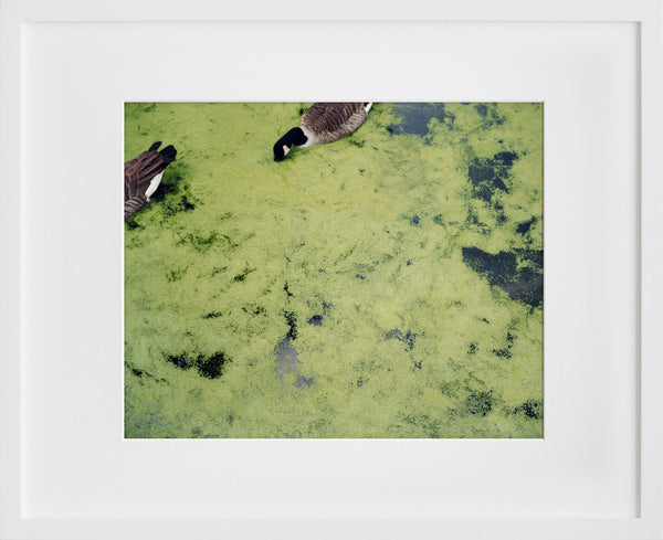 Untitled (Geese, London)