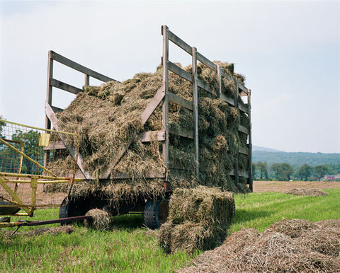 Hay Harvest, New Jersey
