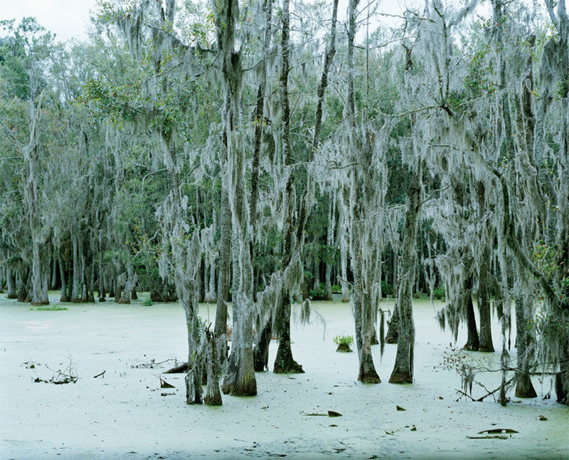 Untitled, Swamp #2