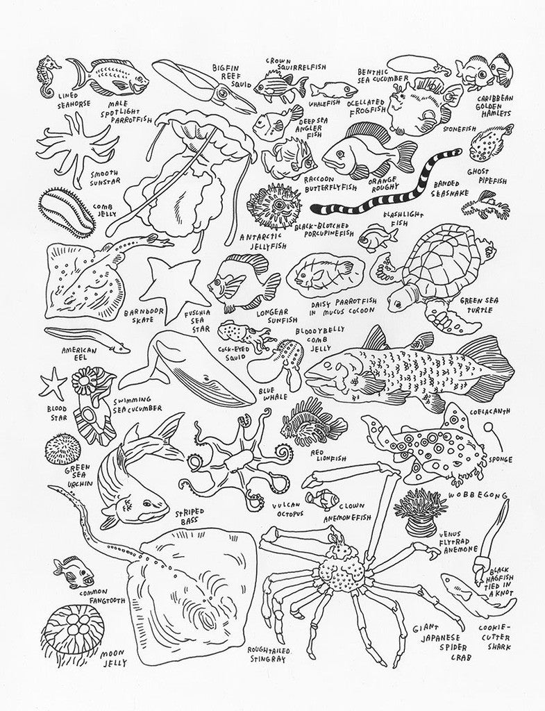 Jason Polan's Sea Creatures at The American Museum of ...