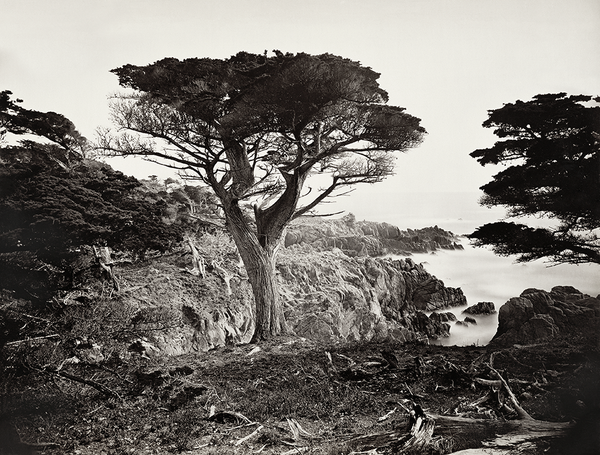 Cypress Point, Monterey