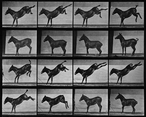 Animal Locomotion: Plate 658 (Mule) (2012)