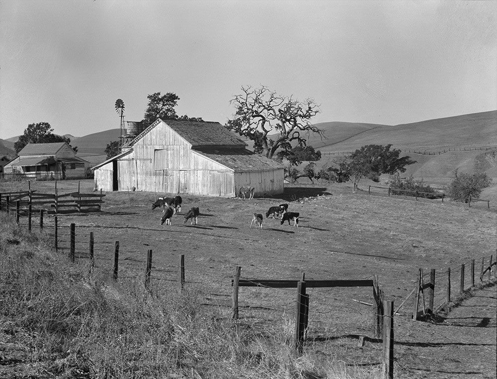 Dorothea Lange S Small Farm Of California Contra Costa