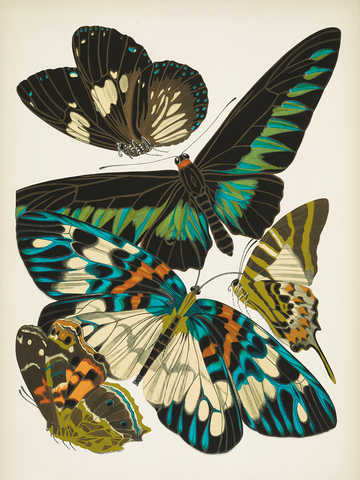 Papillons, Plate 10