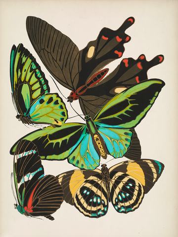 Papillons, Plate 1