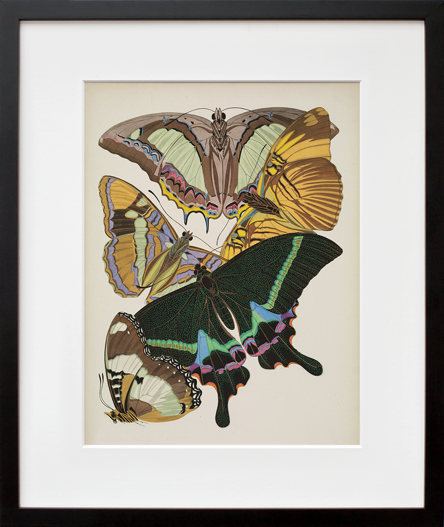 Papillons, Plate 8