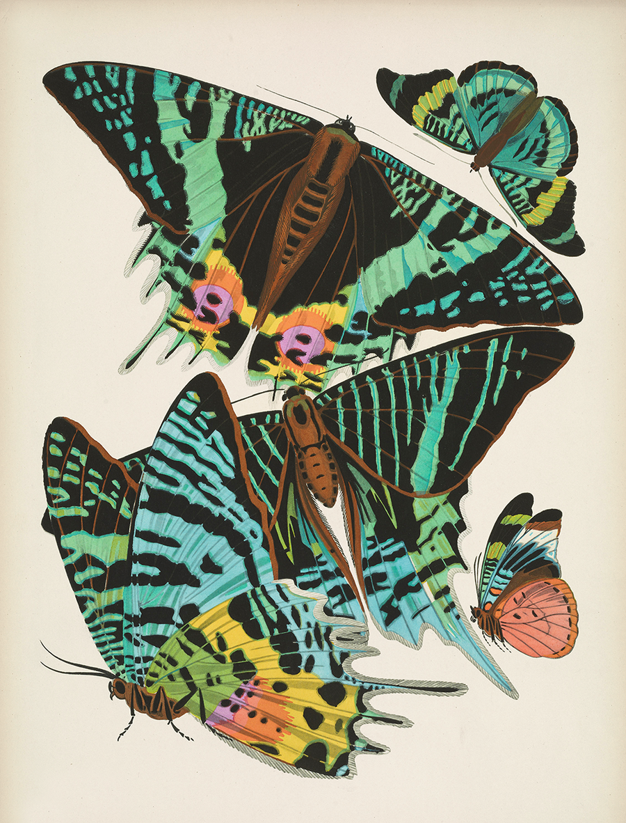 Papillons, Plate 7