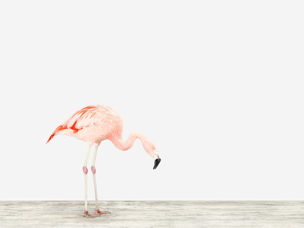 Sharon Montrose S Flamingo No 4 20x200
