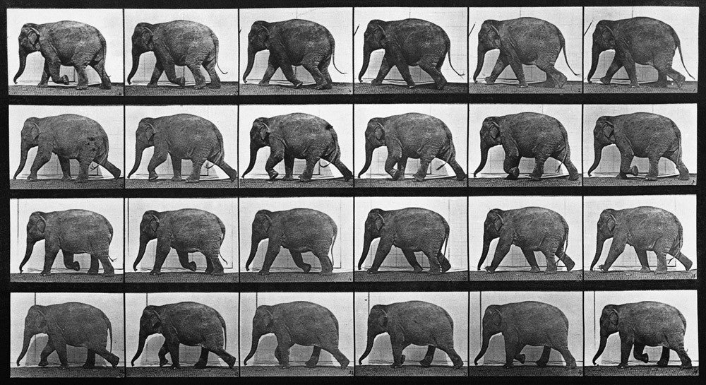 Animal Locomotion: Plate 733 (Elephant)
