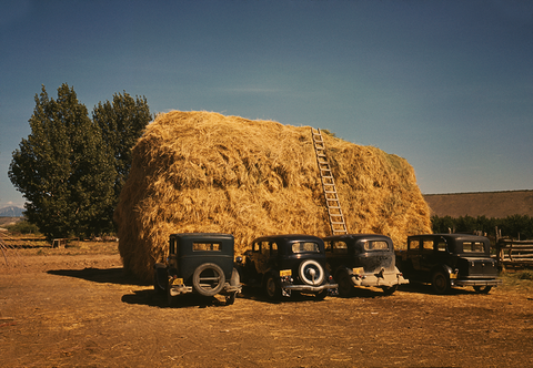 Hay stack and automobile of peach pickers, Delta County, Colorado