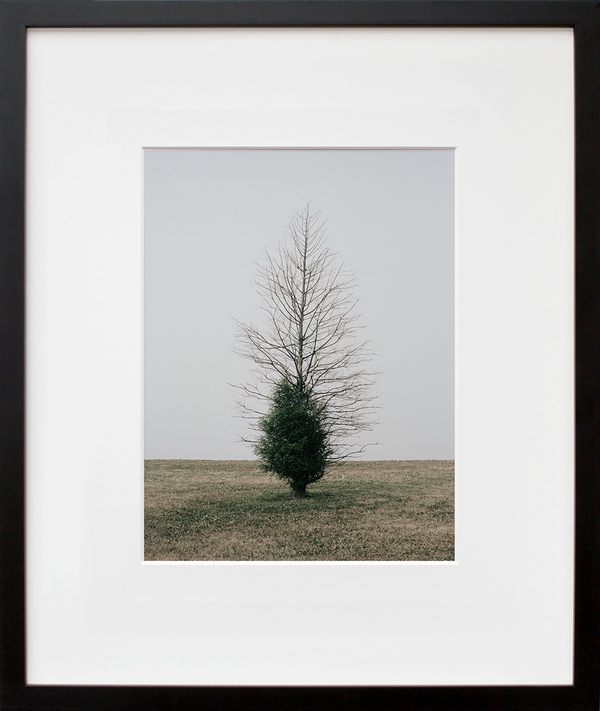Belmont Harbor Tree II, Chicago (framed + quick-ship)
