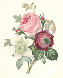 Rose, Anemone, Clematide