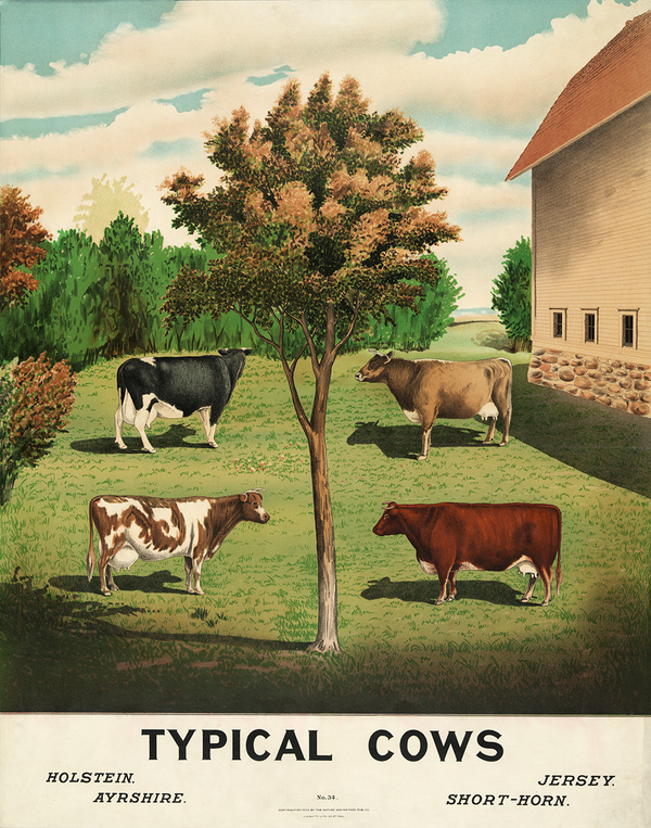 Typical Cows