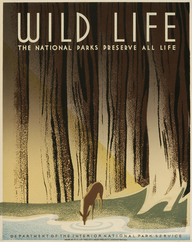 Wild Life (The national parks preserve all life)