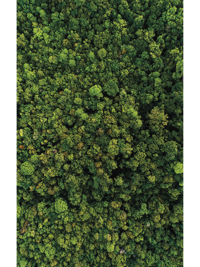 Aerial Trees Indoor Outdoor Area Rug