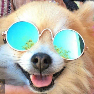 Classy dog/cat sunglasses in round shape 🤩😎😻 - PupiPlace