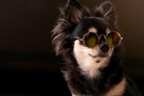 Classy cat and dog with sunglasses in circle shape 🐶😎😻 - PupiPlace