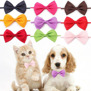 Colorful cat/dog bow ties for fashion pets 🐶🎀😻 - PupiPlace