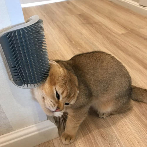 Self-Grooming corner massager cat comb 😻🧵🐈🐾 - PupiPlace