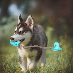bite dog chewing ball 🐶👌🪀 - PupiPlace