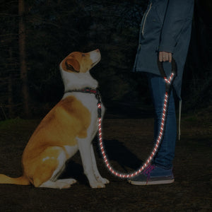 1.5 M Heavy-Duty dog leash for strong dogs 😎🦾⚒⛓🐕🐕‍🦺 - PupiPlace