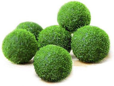 Classier Prime: Buy Luffy Luffy Nano Marimo Moss Balls, Unique Green Spherical Plants, Create Legendary Lush Landscape in Your Aquarium, Habitat for Triops, Perfect Décor, Thrive with Minimal Care, 6-Pcs