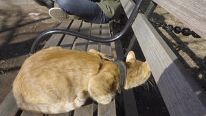 orange Tabby cat scared on bench in Washington Square Park with arch in background in NYC