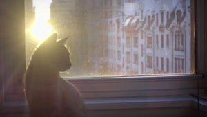 cat walking on windowsill - looking out window - sunset in NYC