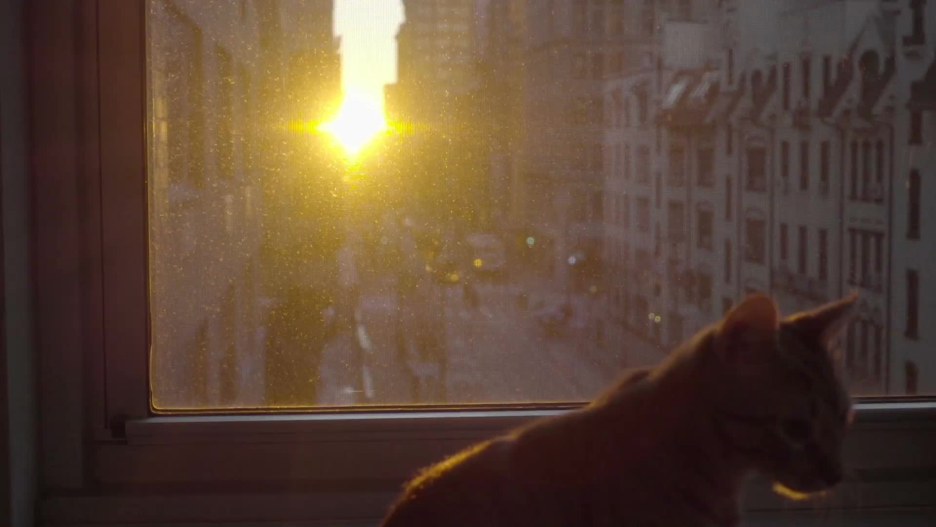 cat on window sill enjoying sunset inside Manhattan apartment in NYC