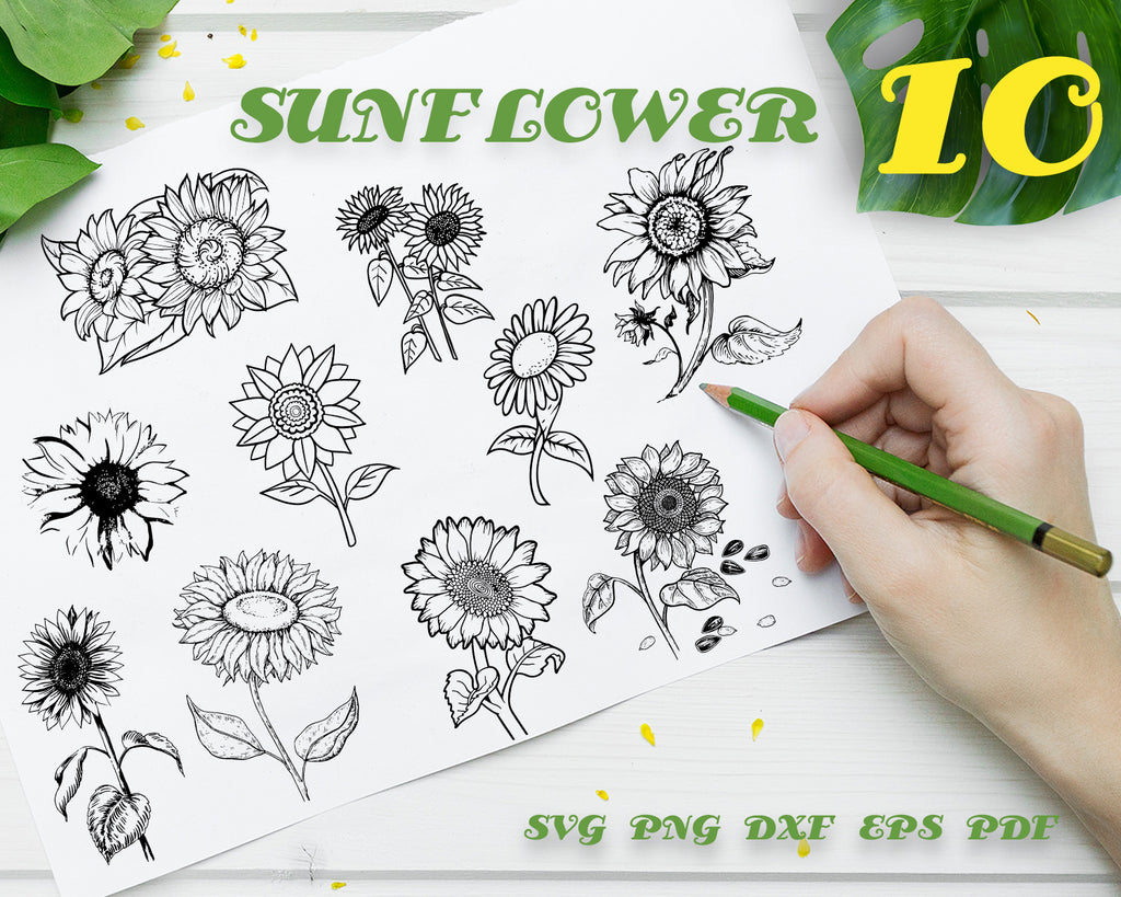SUNFLOWER SVG, Floral, Flower Svg, Sunflowers Clip Art, Sunflower Stamp Svg, Sunflower Stencil Svg, Dxf, Eps, Floral, Silhouette, Cricut, Cut Files, Digital design, Instant Download