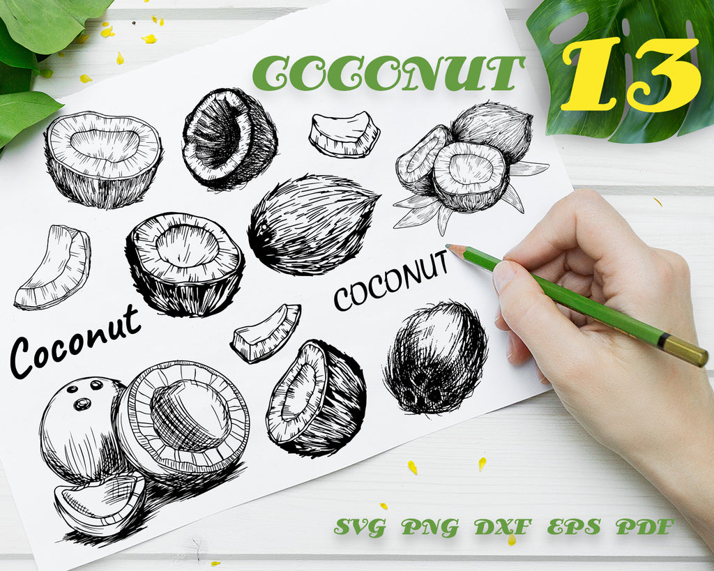 COCONUT SVG, Coconut Clipart, Coconut Files for Cricut, Coconut Cut Files For Silhouette, Coconut Dxf Coconut Png Eps Vector Design
