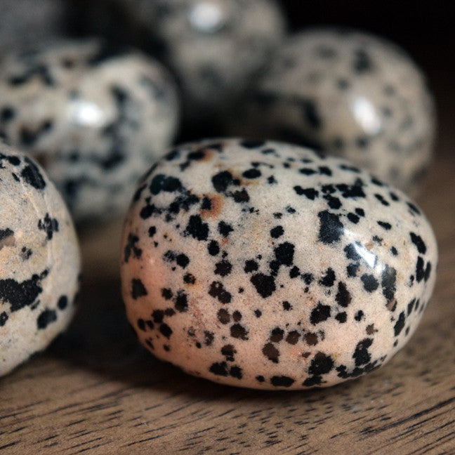 Large Tumbled Dalmation Jasper