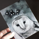 Noctua The Little Owl - Postcard Print