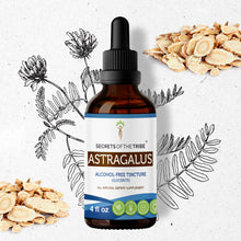 Load image into Gallery viewer, Astragalus Tincture