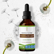 Load image into Gallery viewer, Dandelion Leaf Tincture