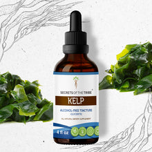 Load image into Gallery viewer, Kelp Tincture Extract, Organic (Ascophyllum nodosum) Dried Plant - secretsofthetribe