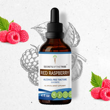 Load image into Gallery viewer, Red Raspberry Tincture