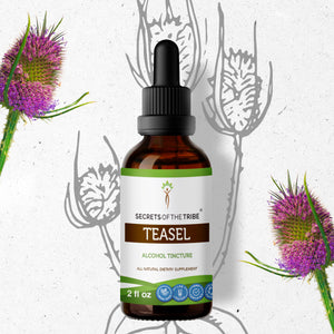 Teasel Tincture