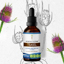 Load image into Gallery viewer, Teasel Tincture