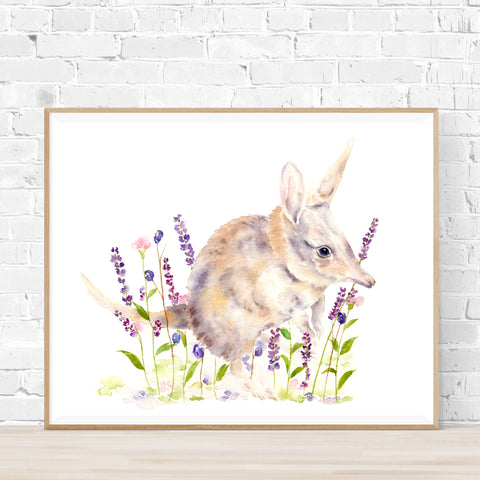 Banjo the Bilby Print