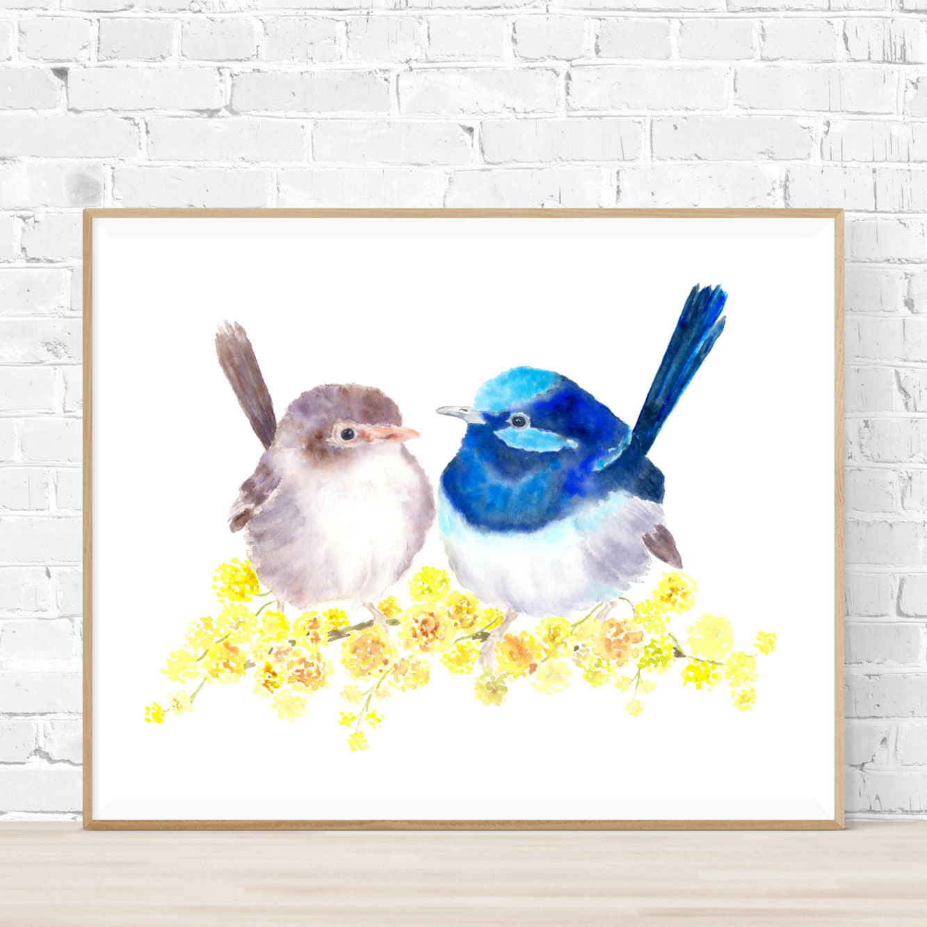 Superb Fairy Wrens Print