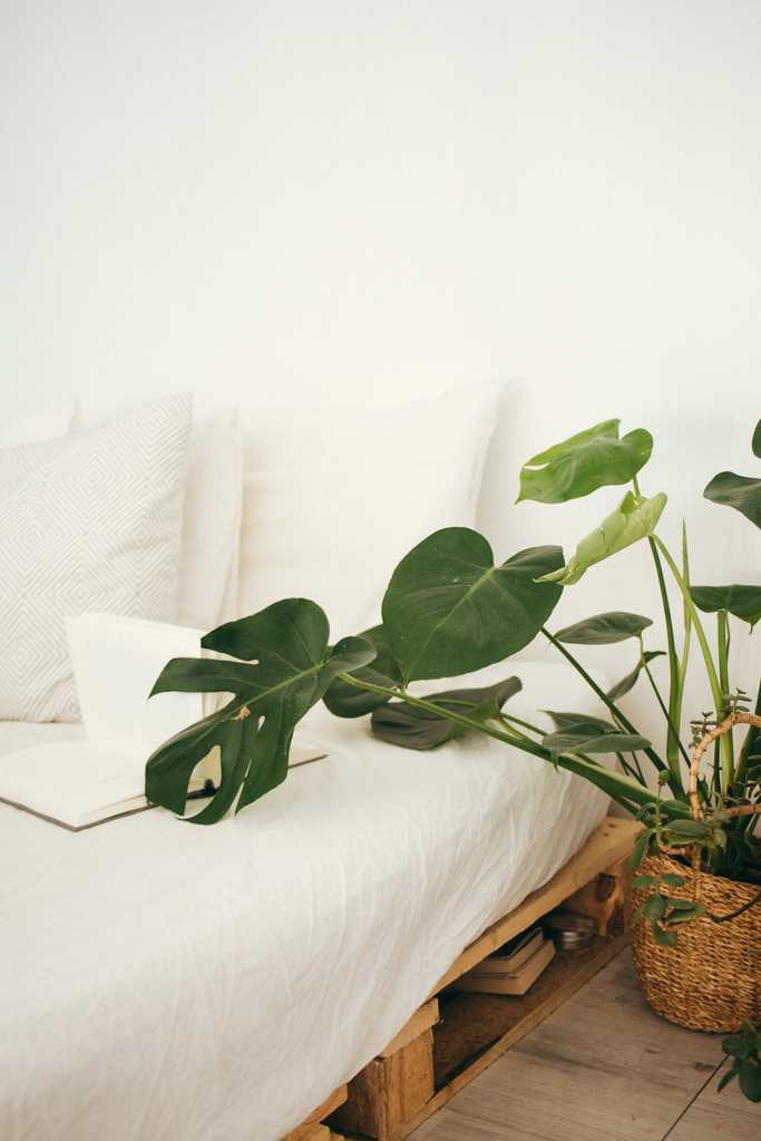 White luxury bedding set with monstera plant next to bed