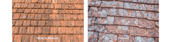 Images of Lichen and Black Mould on a Terracotta Tile Roof