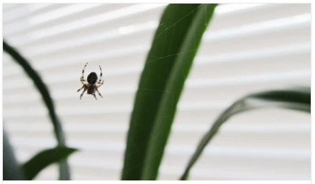 Common spiders you may see around your home