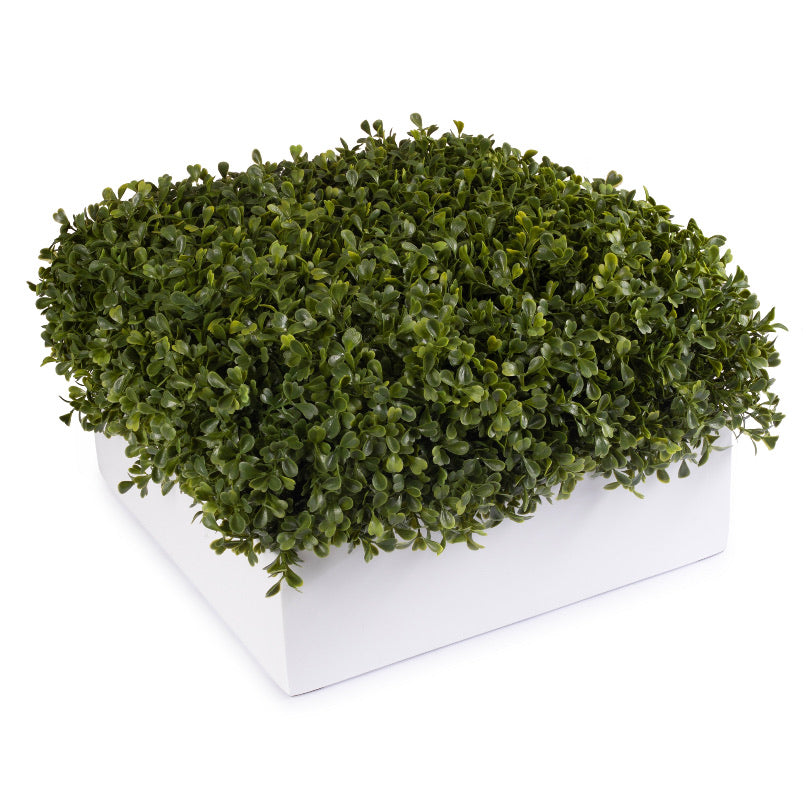 White Square Boxwood Pot